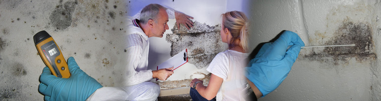 Mold Inspection Bonita Springs FL