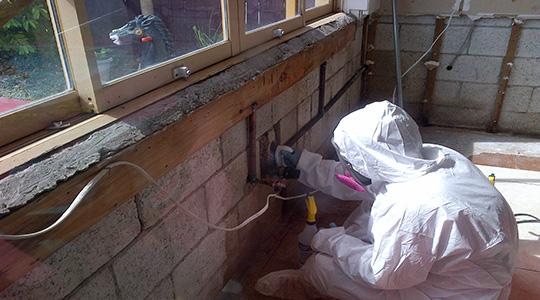 Mold Inspection Costs Bonita Springs FL