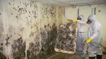 Mold Testing Estimates Bonita Springs FL